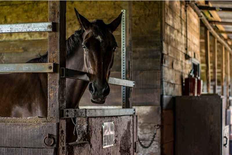 stalling-paarden